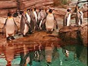 Jouer à Penguins in the zoo slide puzzle