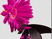Jouer à Pink daisy and black butterfly slide puzzle