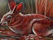 Jouer à Red tame rabbits puzzle