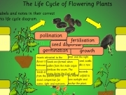 Jouer à The life cycle of flowering plants